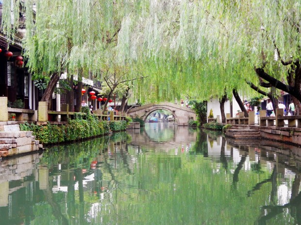 Weeping willows over the canals