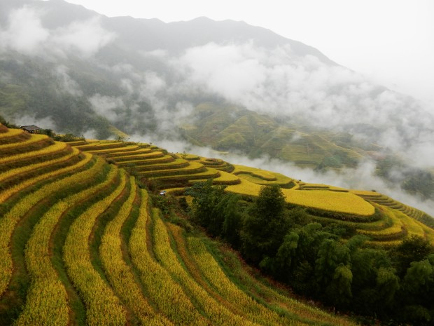 Longsheng: The Dragon's Back rice terraces