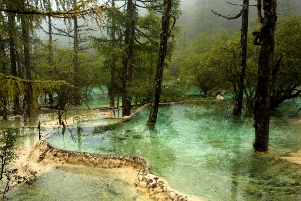 Huanglong National Park - Trees in the terraces