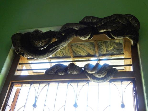 Snakes twined together on the windows at Baungdawgyoke pagoda